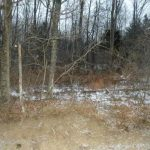 Columbia County NY Real Estate - Roadside Wooded Lot, M. Simmons Rd, Cairo, NY 12413