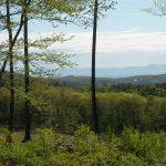 Stephentown 40 Acres Views