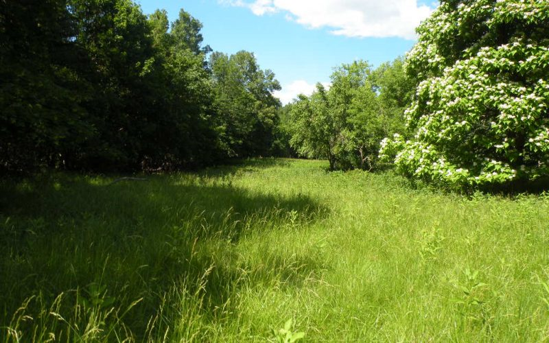 56+ Acres with Frontage, Elka Park Rd, Tannersville, NY 12427