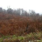 Ancram NY real estate Millerton NY 50 acres 12502