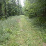 Hillsdale 50 Wooded Acres 12529