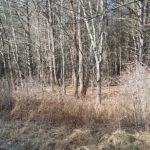 2 Acres Rural Vacant Commercial, State Route 23, Cairo, NY 12413
