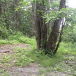 Canaan NY Land 5 Acres, 60 Cunningham Hill Rd, 12029