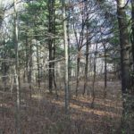 New Baltimore Land 2 Acres Well Septic, 730  Alcove Rd, New Baltimore, NY 12087