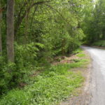 Ghent 15 Acres Wooded 12075