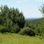 Claverack Land 61 Acres