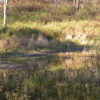 Copake Peartree Lane 7 Plus Acres Pond Site 12516