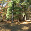 Copake Peartree Lane 6 Plus Acres Wooded 12516