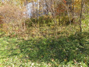 Cairo Land Auction Creek Frontage