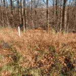 Austerlitz 95 Wooded  Acres 12017