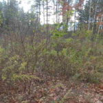 Philmont Approved Lots $38,500 12565