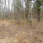 Austerlitz Land 10 Acres Wooded12017