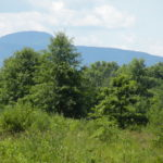 Clermont Land Farm 50 Acres Open Fields Catskill Views 12583