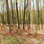 Gallatin Open Wooded 12 Acres 12523 SOLD