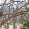 Ancram 45 Acres Open Wooded Views 12502