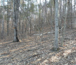 Canaan Land 5 Acres 12029 Private Road - Accessible 2 ways