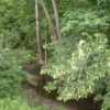 Livingston 140 Acres Secluded, Private paradise 12541