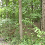 Austerlitz Land 45 Acres Level Wooded Secluded 12165