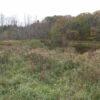 Windham Mini Horse Farm 12496