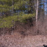 Sleepy Hollow Lake Lot Private