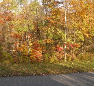 Ashland NY 18 Acres Wooded Parcel Long Frontage 12407