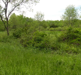 Ghent Land 2 Acres Great Location Near Omi 112075