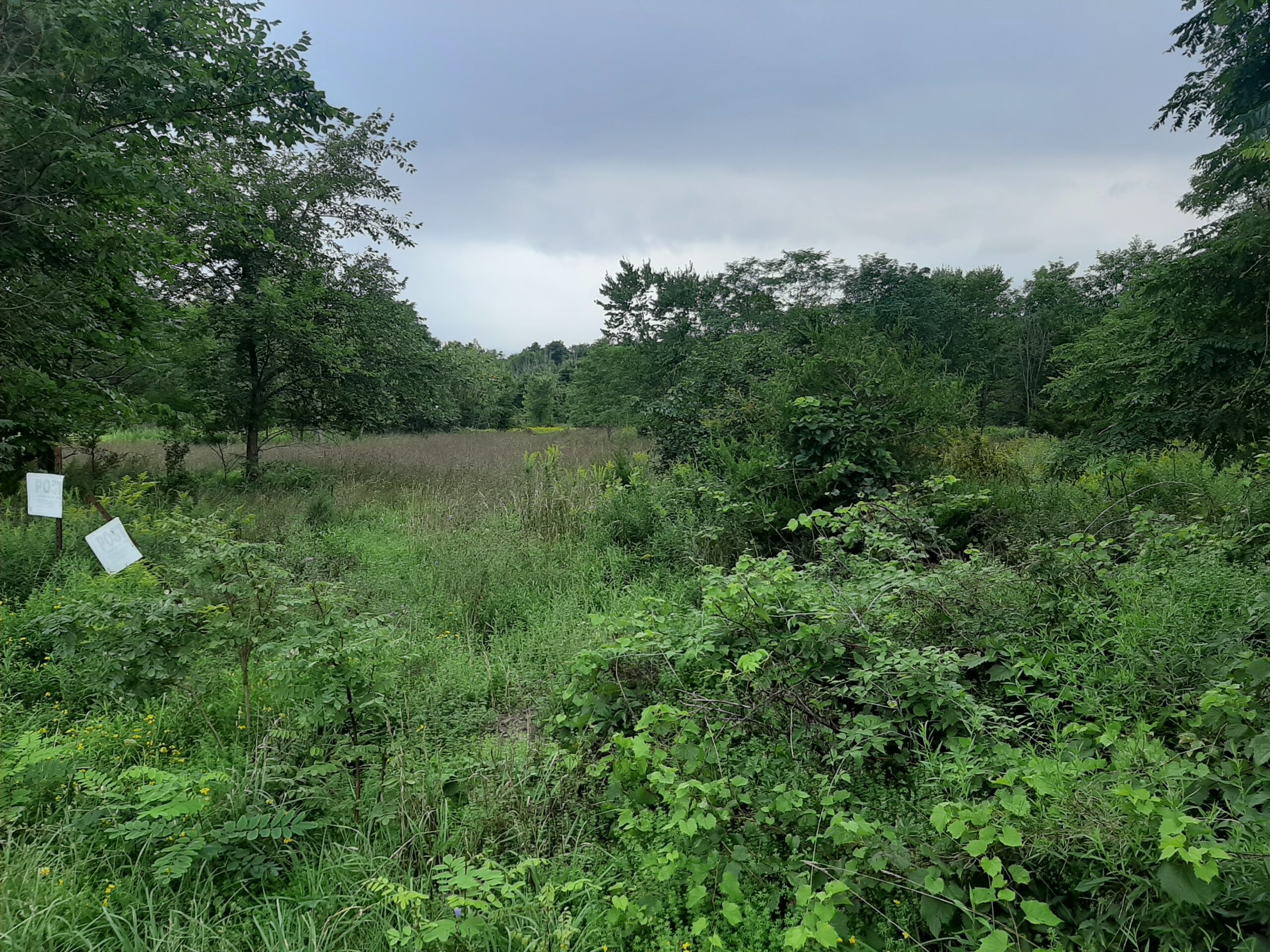 Cairo 15 Acres Land Country Road 4 lot Subdivision