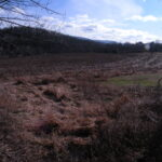 Copake Land 20 Acres Currently in Corn 12516