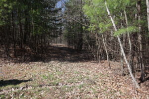 New Lebanon 5 Acres Wooded Lot Great Spot to Build 12024