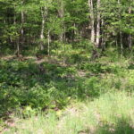 Copake Building Lot 4.4 Acres Country Lot with Stream 12516